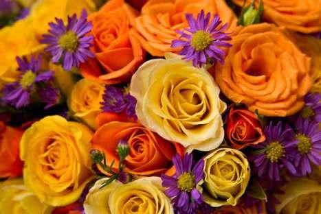 flowers-71